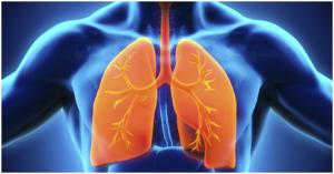 bilde lunge